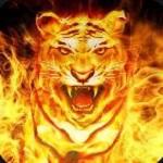 Best-Live-Tv-Kodi-Addon-Firecat
